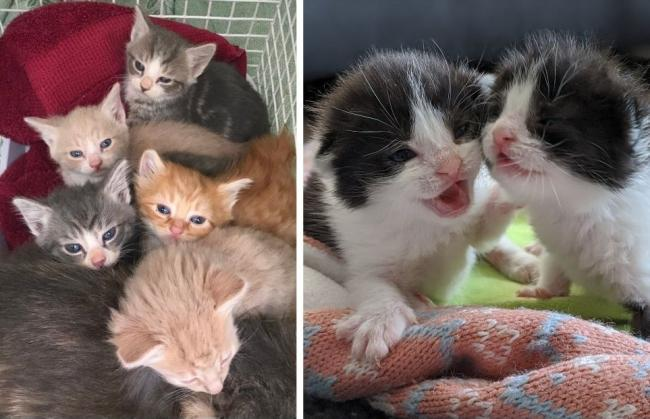 Kitten Crisis Why The Uk Could Have Thousands Of Extra Births This Summer Largs And Millport Weekly News