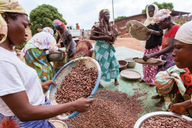 Cocoa bean sorting in West Africa